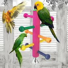Papegaaien Speelgoed